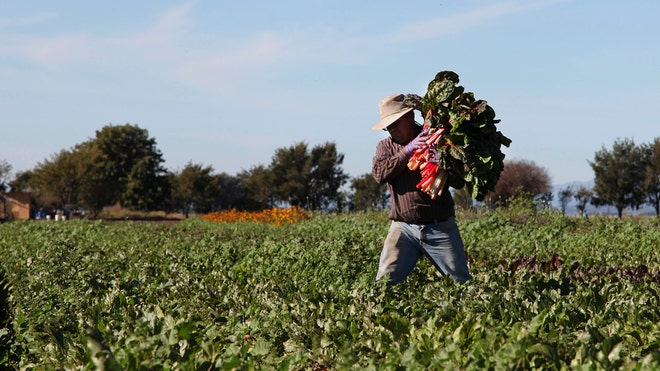 Latino Farmworkers BT.jpg
