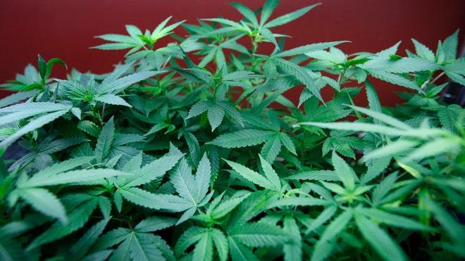 Marijuana_art.jpg