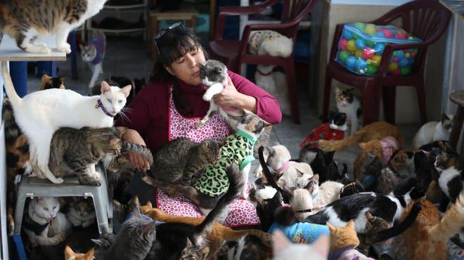 Peru_Cat_Hospice__erika.garcia@foxnewslatino.com_3.jpg