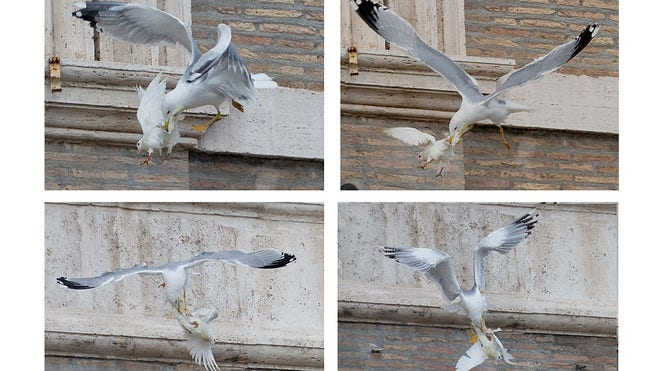 Vatican_Pope_Doves_4.jpg