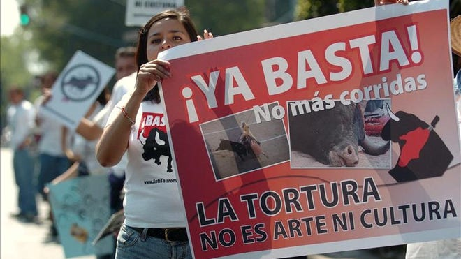 Veracruz bans bullfighting.JPG