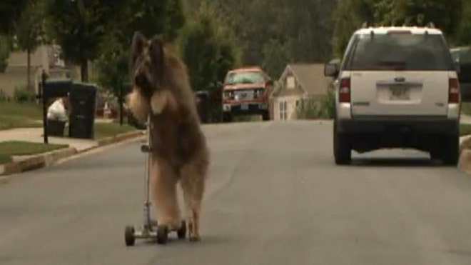 dog riding scooter.jpg