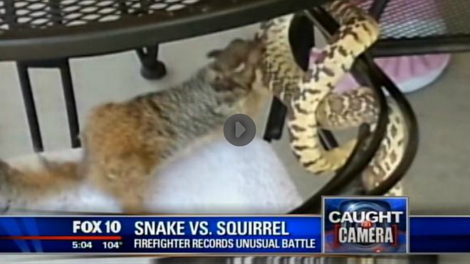 snake v squirrel.jpg
