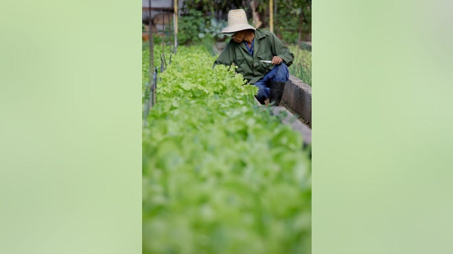 Cuba_Agriculture1.jpg