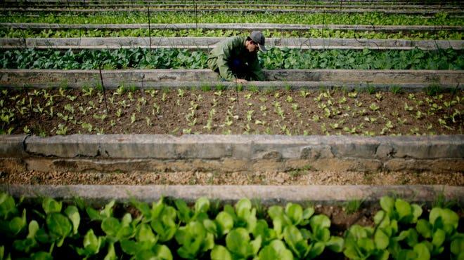 Cuba_Agriculture2.jpg