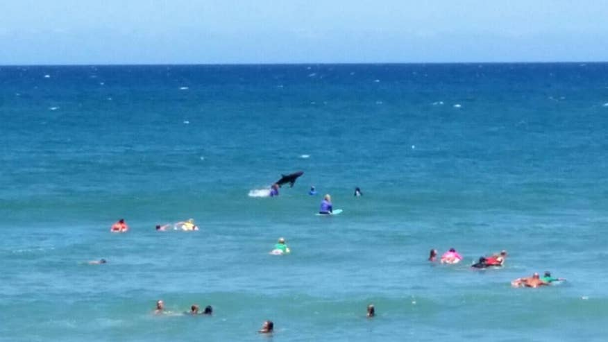 Jumping shark 'photobombs' surfing competition off Australian town, breaching twice nearby