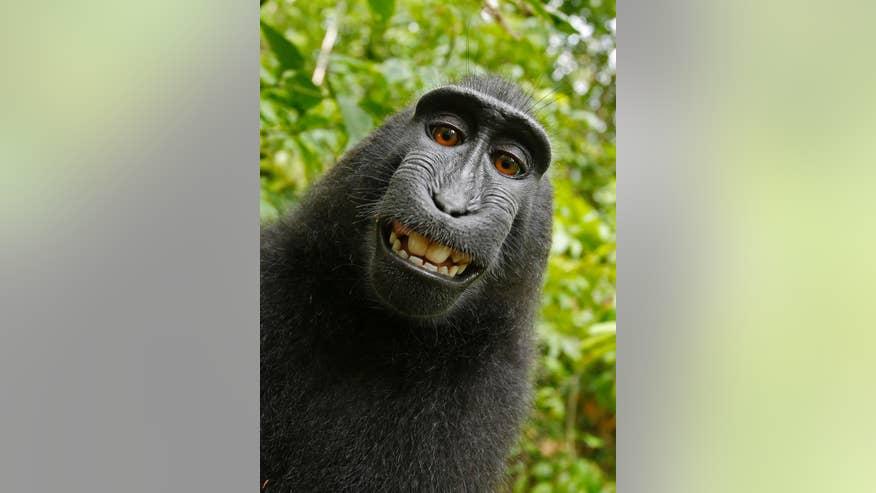Monkey Selfie Lawsuit-1.jpg