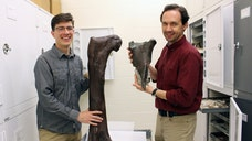 A fragmented femur bone hidden underwater for millions of years has become the first evidence that a dinosaur once roamed Washington, a new study finds