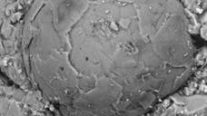 Tiny, spherical fossils found in southern China appear to be the embryos of a previously unknown animal.