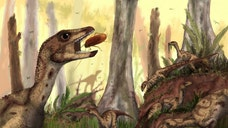 The fossil of a new two-legged, fox-sized dinosaur relative of both Stegosaurus and Triceratops, which dates back about  million years, has been discovered in Venezuela.