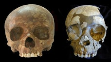 Ancient teeth from Italy suggest that the arrival of modern humans in Western Europe coincided with the demise of Neanderthals there, researchers said