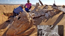 Hidden for more than  years beneath the rolling sand dunes of Guadalupe, California, an enormous, plaster sphinx from the  blockbuster movie The Ten Commandments has been rediscovered and is now above ground.