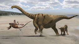 How did the largest of all dinosaurs evolve necks longer than any other creature that has ever lived? One secret: mostly hollow neck bones, researchers say