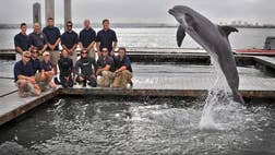A Navy dolphin training to look for mines off the coast of San Diego found a museum-worthy th-century torpedo on the seafloor, military officials said.