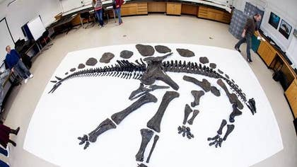 A rare skeleton of a nearly -foot-tall, -million-year-old Stegosaurus will be unveiled at the Natural History Museum in London next month.