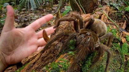 Piotr Naskrecki was taking a nighttime walk in a rainforest in Guyana, when he heard rustling as if something were creeping underfoot.
