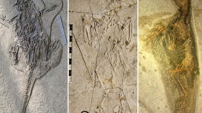 Pompeii-like eruption fossilized dinos in death poses