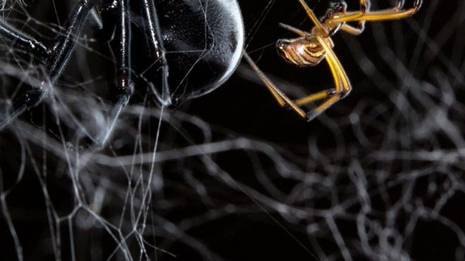 For male spiders, it's twerk or be eaten