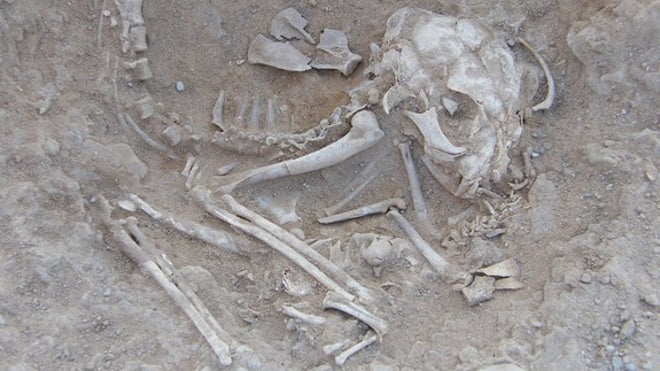 Ancient Egyptian kitten skeletons hint at cat domestication