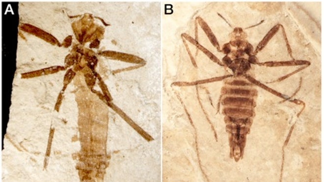 125 million-year-old sneaky flea dined on flying reptiles