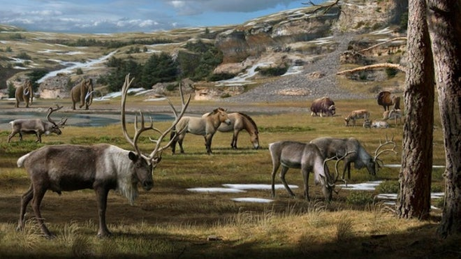 Diet of ancient herbivores sheds light on what the Arctic ecosystem used to be like Pleistocene-arctic