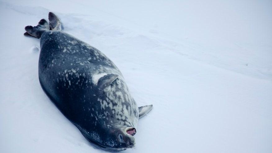 2011_Antarktis_TSteuer-057