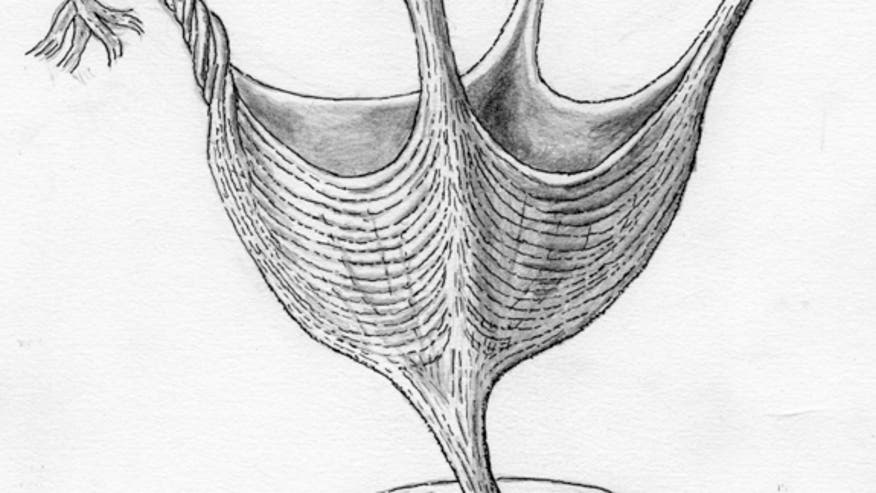 This fossilized creature has the world's oldest muscles