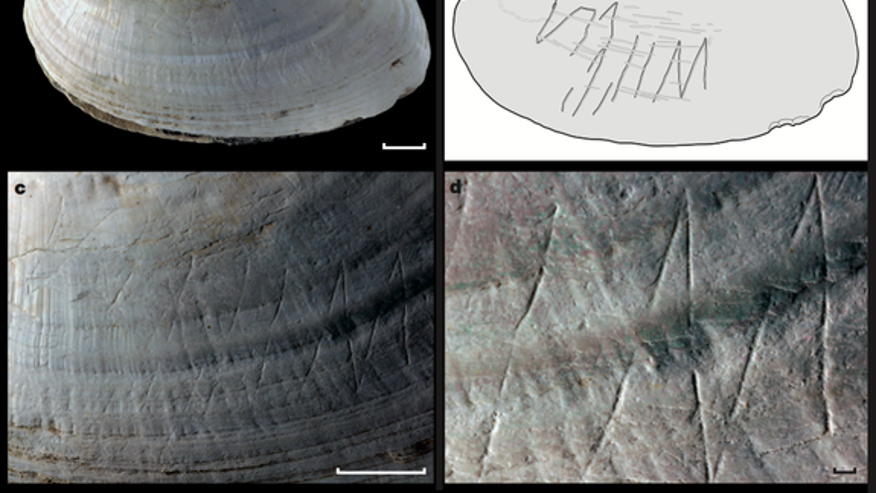 540,000-year-old shell carvings may be human ancestor's oldest art