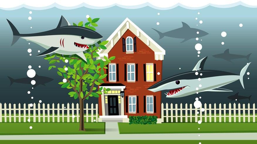 water-sharks-4d58556c8816f410VgnVCM100000d7c1a8c0____