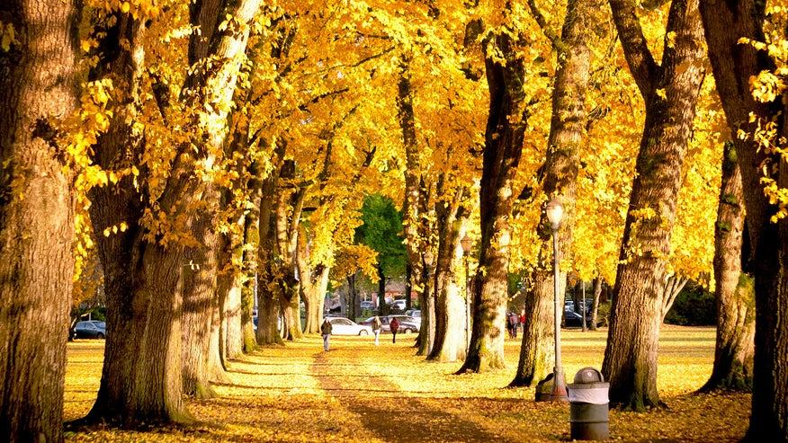 corvalis-foliage-f46fd72a58adf410VgnVCM100000d7c1a8c0____