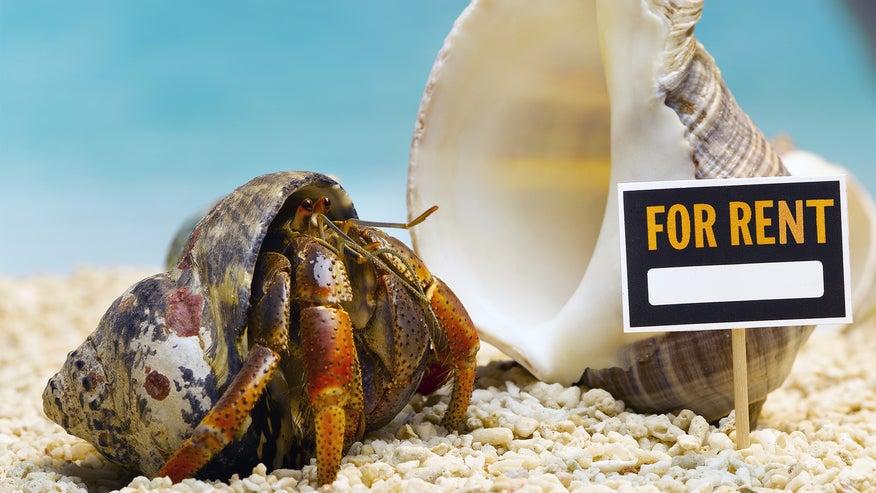 hermit-crab-a223460155060510VgnVCM100000d7c1a8c0____