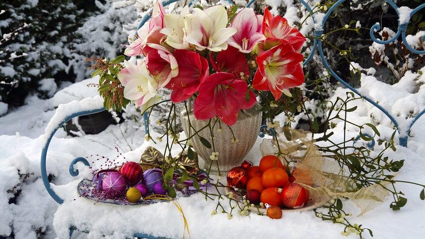 yard-in-winter-7c8b27ea99fc0510VgnVCM100000d7c1a8c0____