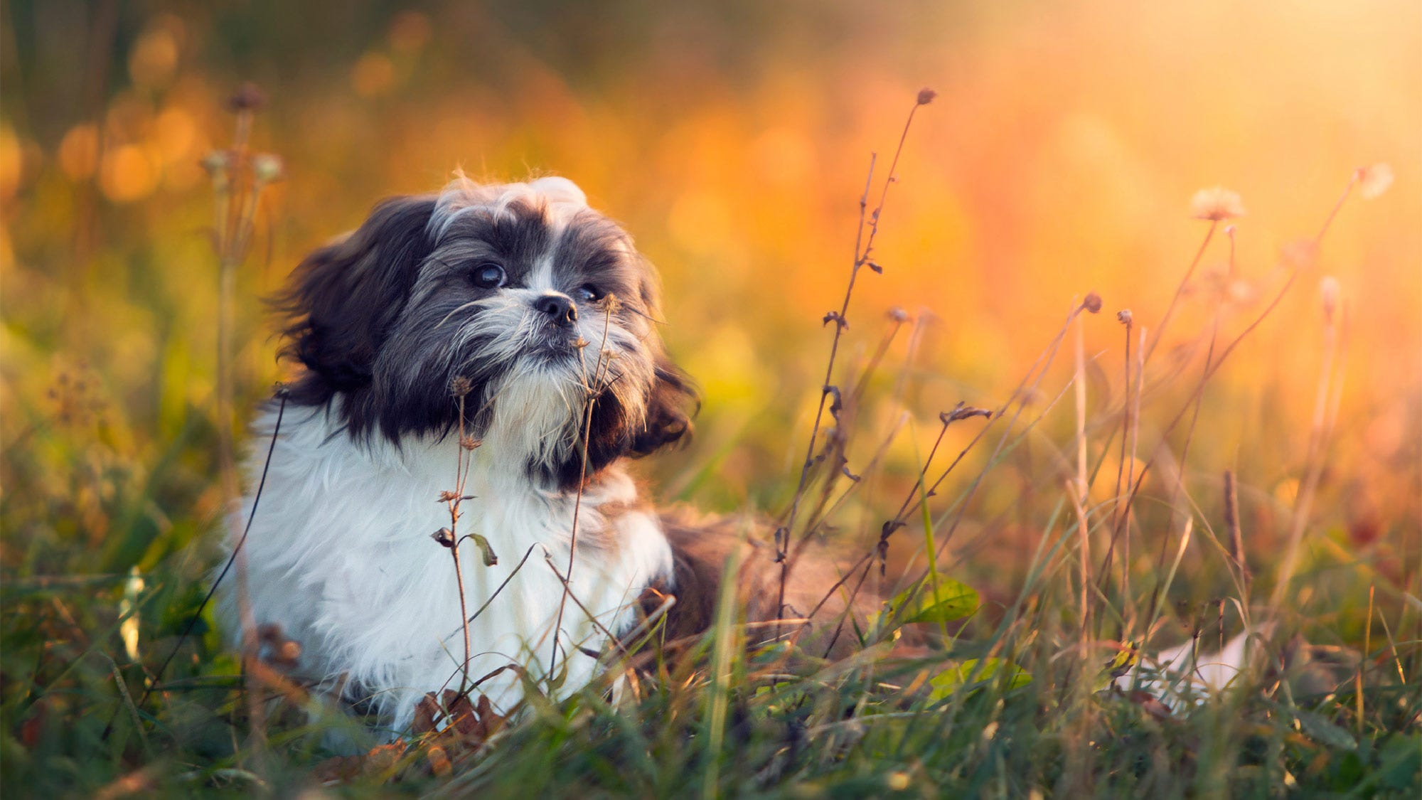 The Best Dog Breeds for Apartment Living | Fox News