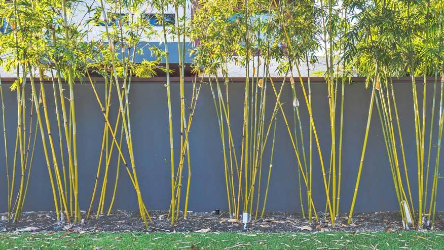 bamboo-bde8081513044510VgnVCM100000d7c1a8c0____