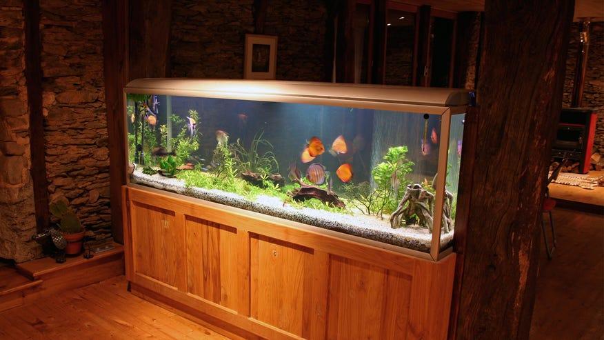 home-aquarium-849b8b7c55f34510VgnVCM100000d7c1a8c0____