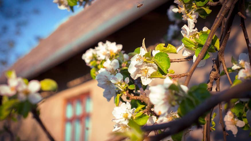 home-spring-fc59081513044510VgnVCM100000d7c1a8c0____