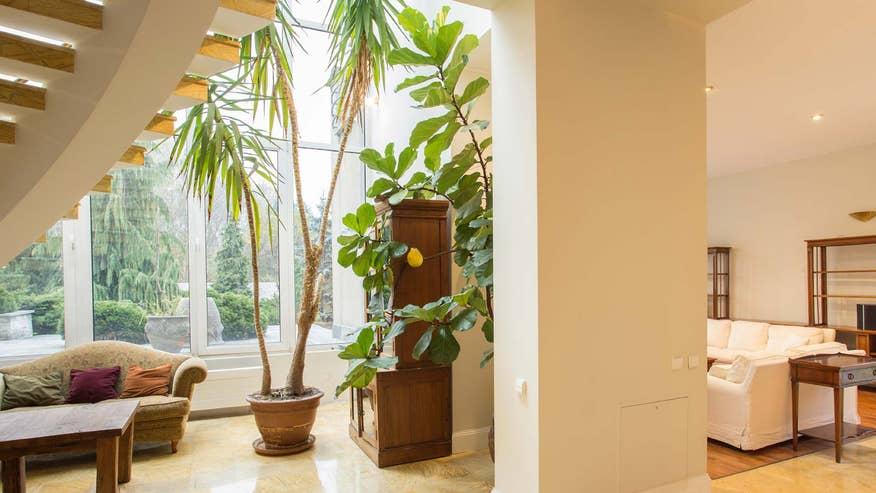 indoor-plants-fc59081513044510VgnVCM100000d7c1a8c0____