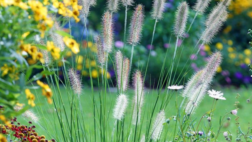 landscaping-fountain-grass-e1459196-bde8081513044510VgnVCM100000d7c1a8c0____