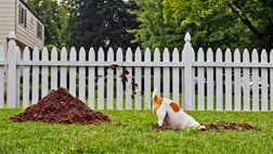 Before my three dogs arrived, my yard was lush and lovely. However, after each new dog joined the family, my yard went further downhill, slowly becoming a muddy mess. The post 'Help, My Dogs Are Wrecking My Yard!' appeared first on Real Estate News and Advice - realtor.com.