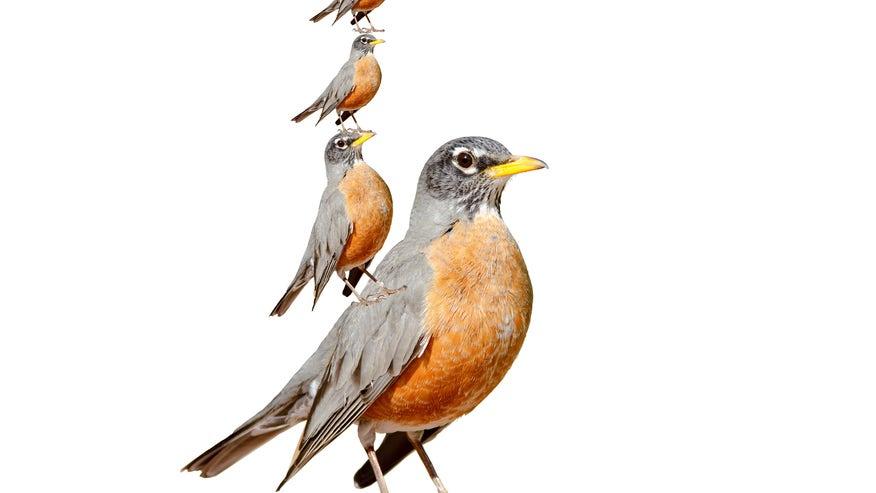 bird-on-a-bird-ad6ea37a6e975510VgnVCM100000d7c1a8c0____
