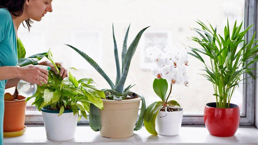 house-plants-1e4ea37a6e975510VgnVCM100000d7c1a8c0____