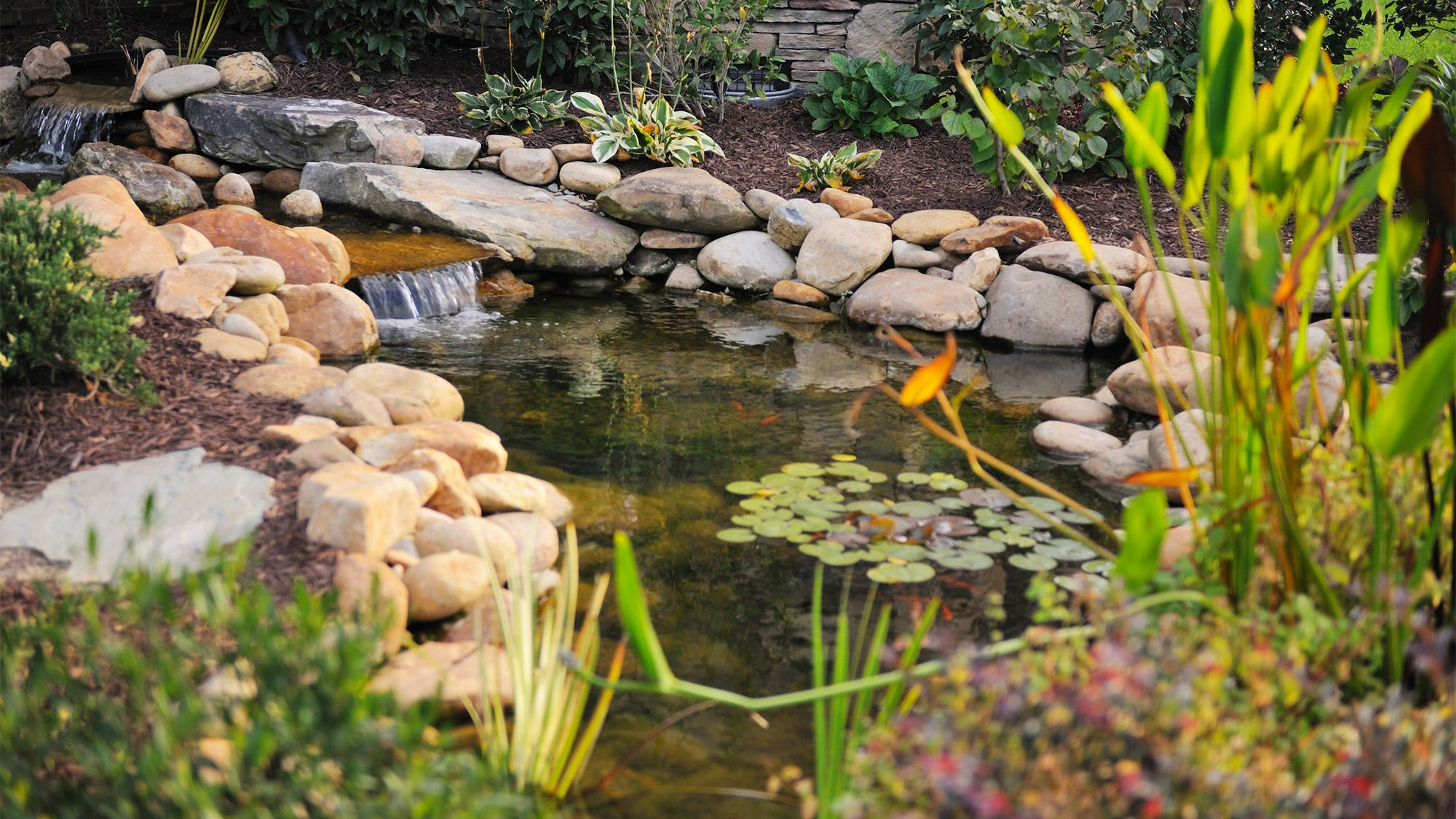 How to build a pond in your yard it 39 s not as easy as just for Making a pond in your backyard