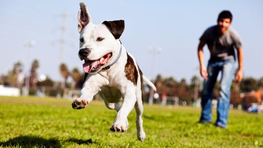 dog-park-188560724b0c6510VgnVCM100000d7c1a8c0____