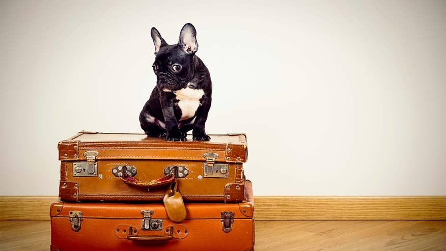 french-bulldog-on-suitcases-894d7b9365a07510VgnVCM100000d7c1a8c0____