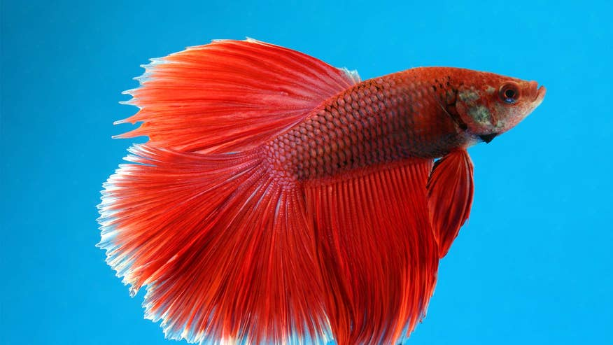 beta-fish-68ba3a0f35277510VgnVCM200000d6c1a8c0____