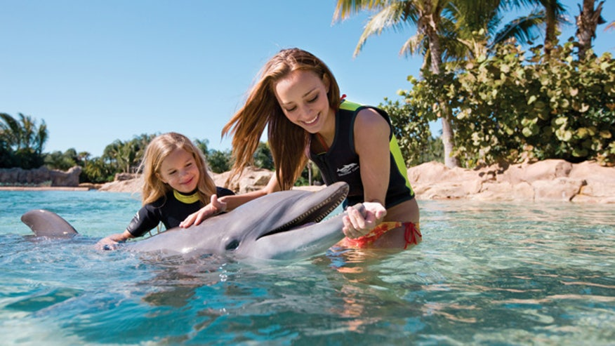 DiscoveryCove_Orlando_FL-dolphin-interaction.jpg