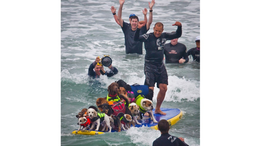 Loews_Coronado_Bay_Hotel_Surf_Dog_Competition.jpg