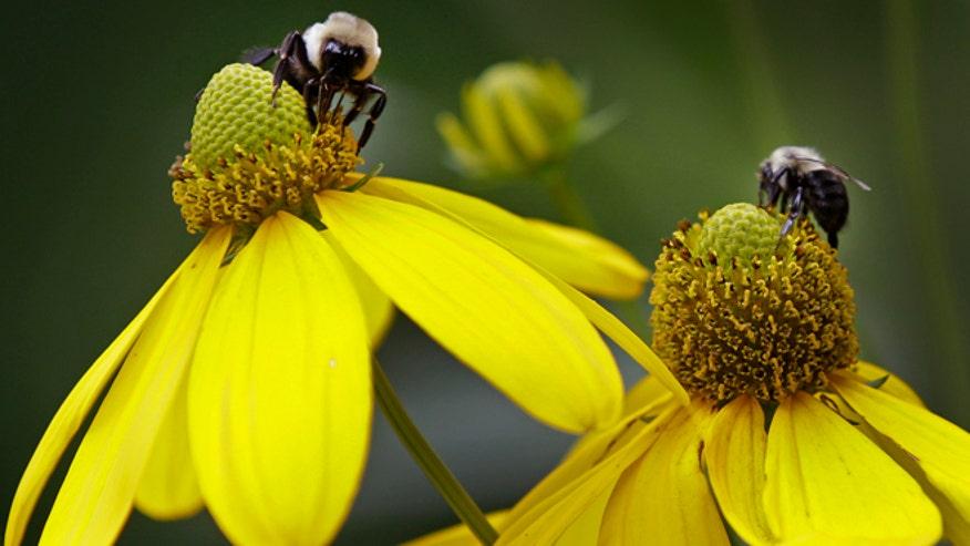 NCDailyLifebees.jpg