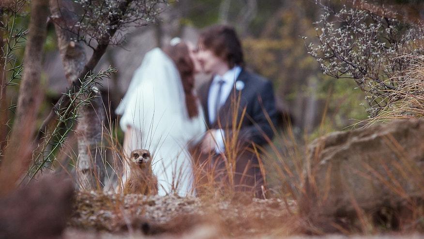 Foxnewscom breaking news latest news current news for Best wedding photos ever taken