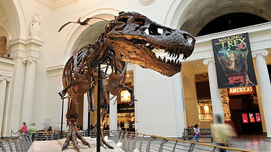 Museums For Kids Who Love Dinosaurs Fox News